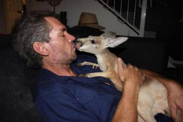 Man Saves Kangaroos In Australia And Nurses Them Back To Health