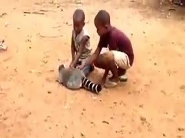 Lemur Is Asking Kids To Scratch Him
