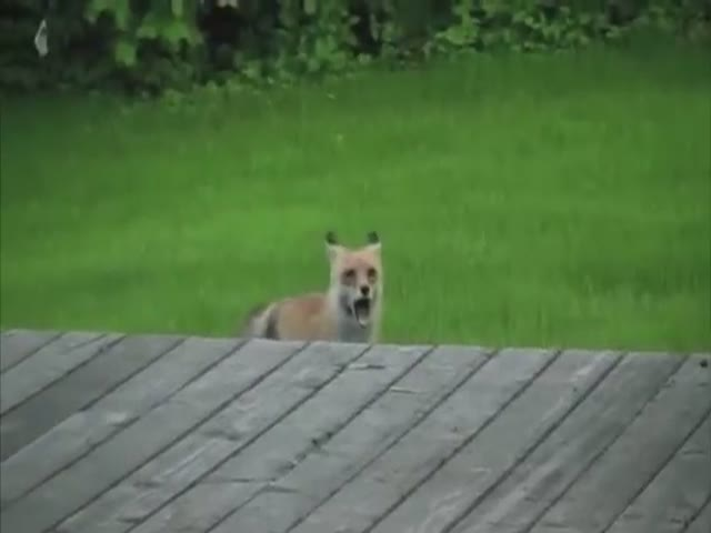 Funny Animal Cover Of Linkin Park's Song