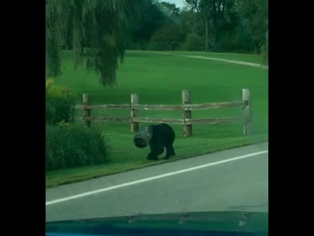 Brave Guys Help Out A Bear To Get Out From A Trap His Face Got Stuck In
