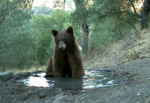 Bear Killed It For Everyone When He Came To A Water Hole