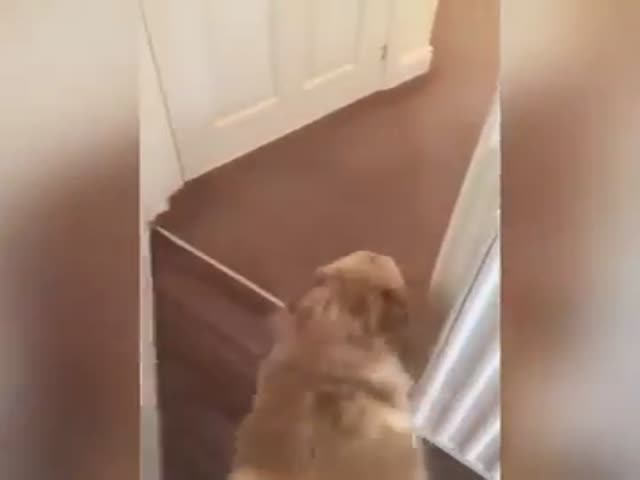 Seven Months Later A Dog And Its Owner Are Finally Reunited