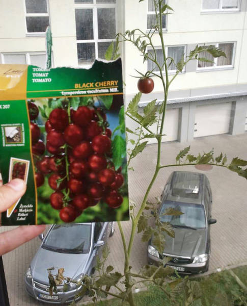 Funny Examples Of Packaging Fails That Are Always Disappointing