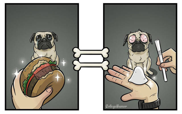 What You See Vs What Your Dog Sees