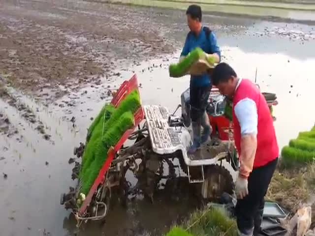 Great Method of Planting Rice In South Korea