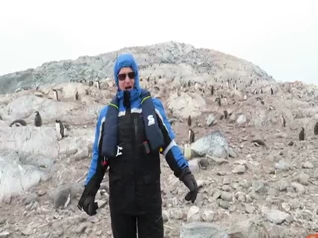 Funny Reaction Of Penguins To Opera Singing