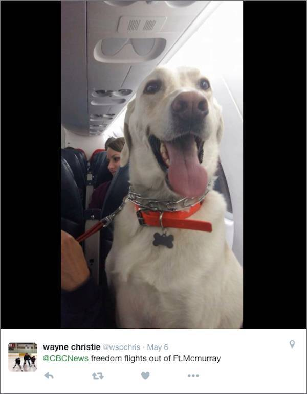 Pet Were Allowed To Be On A Plane