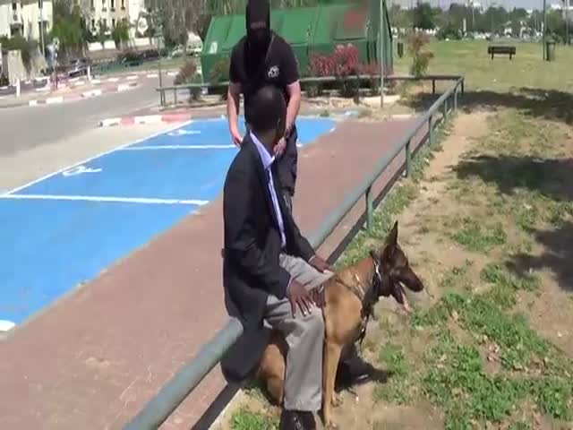 If Your Dog Is Trained Like That, You Won't Be Afraid To Get Stabbed
