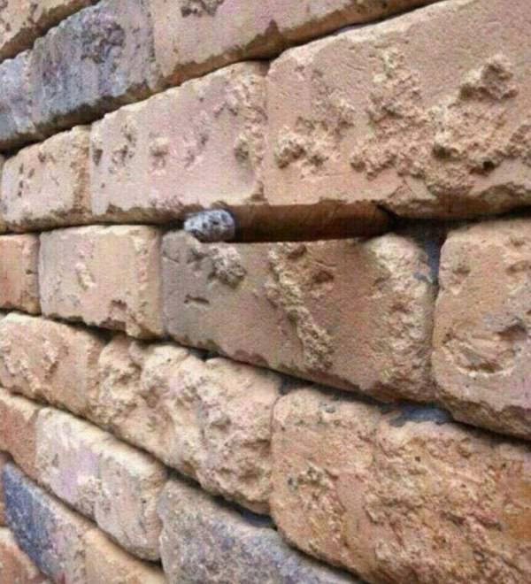 If You See This Optical Illusion Right Away You Won't Be Able To Unsee It