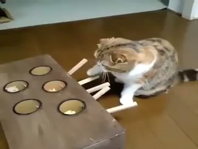 Cat Plays Whac-A-Mole
