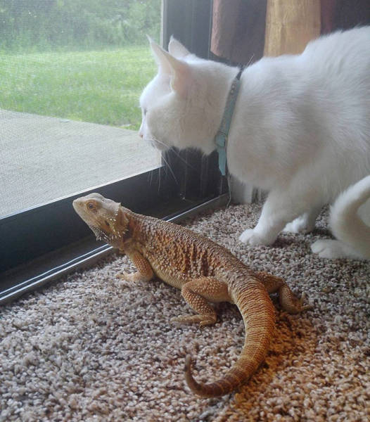 A Dragon And A Cat Became Best Friends For Life