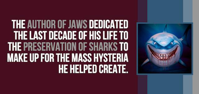 A Few Random And Curious Facts About Sharks