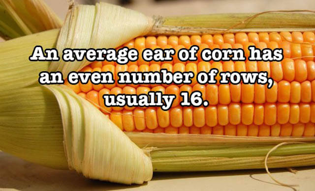 Crazy Food Facts You Didn