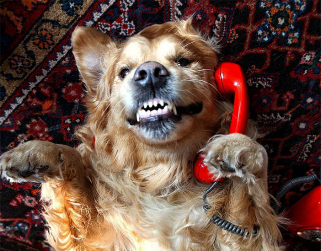 Hello. Yes, This is Dog