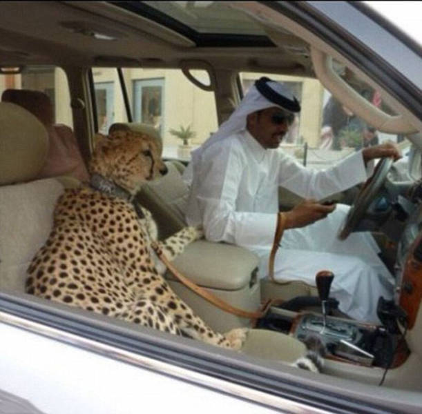The Filthy Rich Like To Flaunt Pictures Of Their Exotic Pets Online