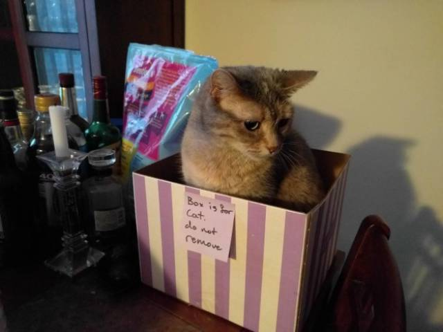If You Are Going To Have A Cat, Look What Is Waiting For You