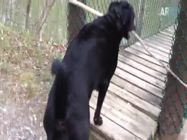 Compilation Of Hilarious Dog Fails