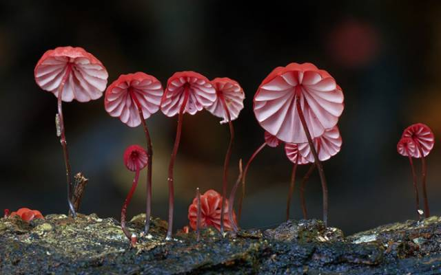 A Fascinating And Colorful World Of Mushrooms