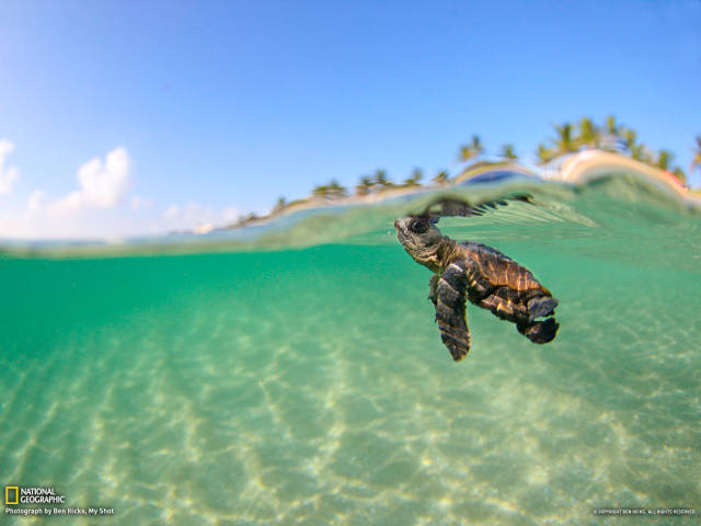 These Photos Of Beautiful Crystal Clear Waters Are Truly Captivating