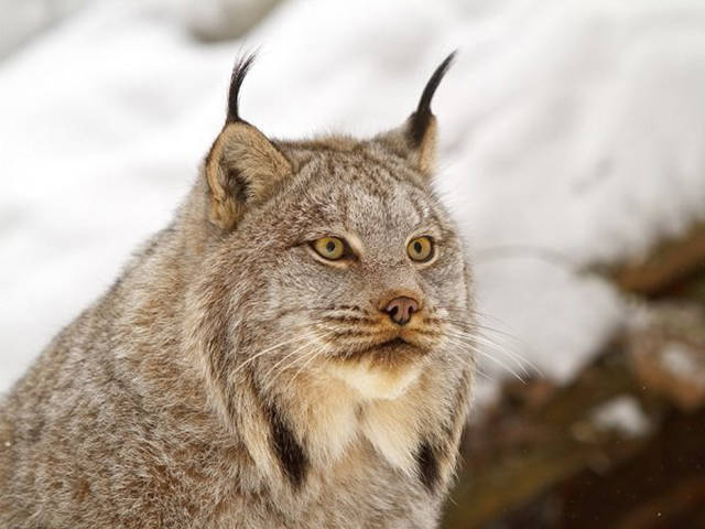 What Do You Know About Animals Of Canada?