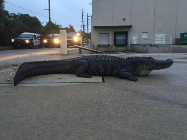 This Can Happen Only In Florida