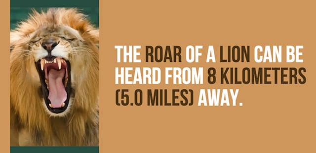 Cool Facts About Lions And Tigers You Didn't Know