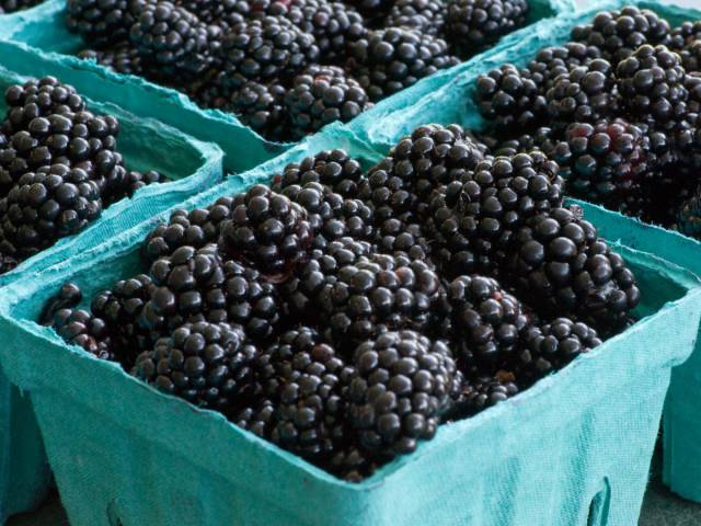17 Berries Ranked According To Their Nutritious Benefits