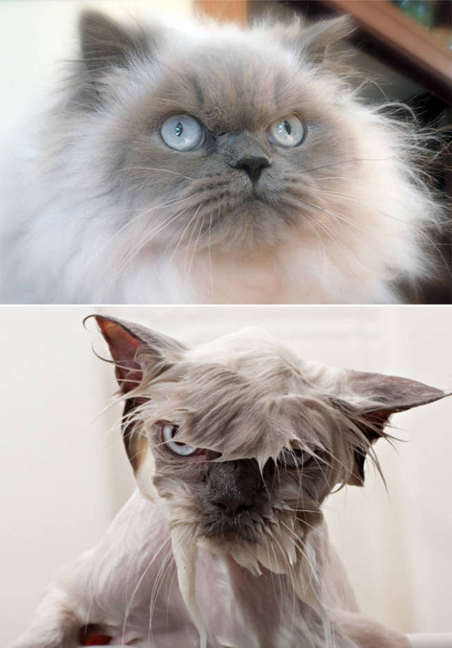 Hilarious Faces Of Animals Before And After Bath