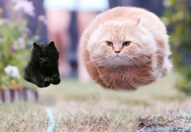 Photogenic Cat Invades A Rugby Game And Sparks A Great Photoshop Battle On The Internet
