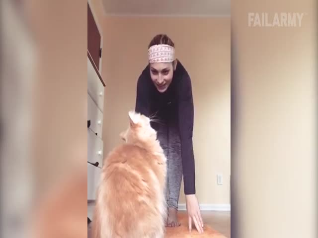 Funny Compilation Of Internet's Best Cat Fails
