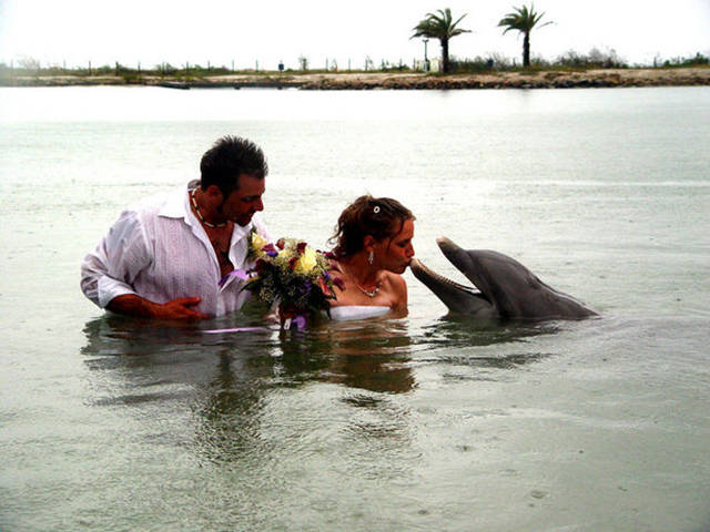 Amusing Wedding Pictures