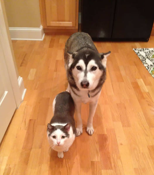 Animal Brothers Who Have Different Mothers