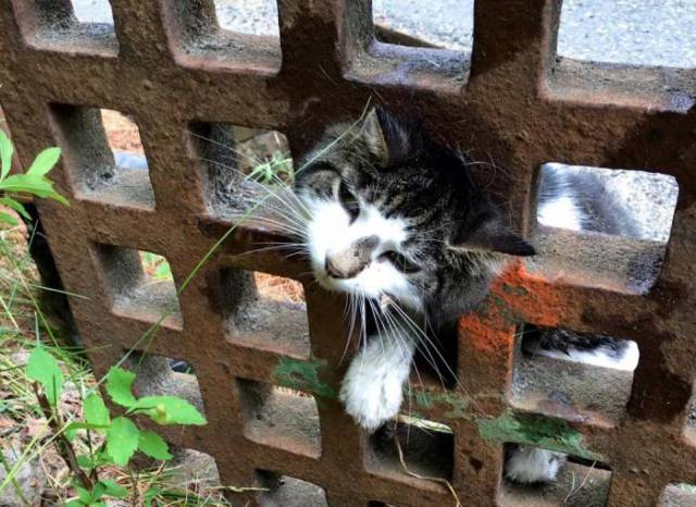 All Those Strange Places That Kitties Stick Their Heads Into…