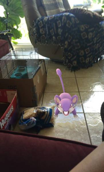Pokemon Go Players Rescue a Bunch Of Abandoned Animals