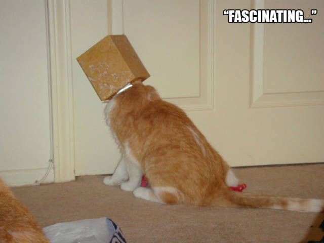 Cats And Their Mysterious Obsession With Boxes