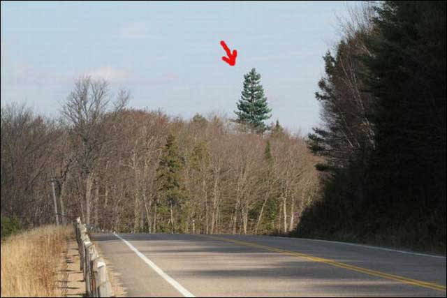 You Think It's A Tree? Look Closer!