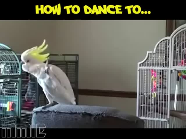 How To Dance To…