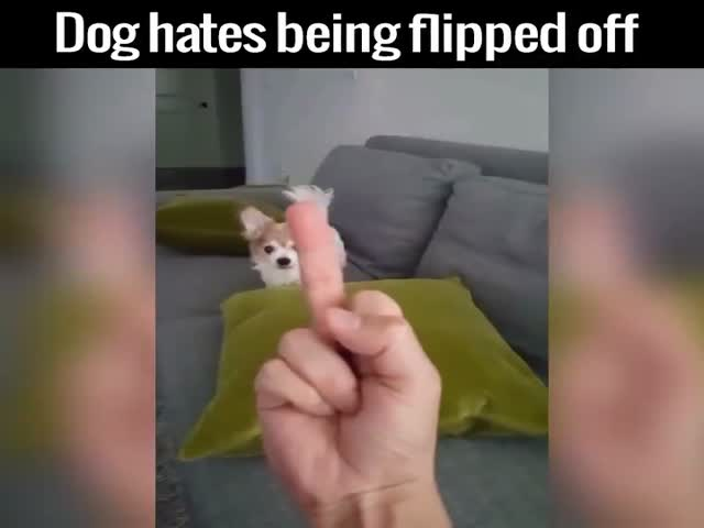 Little Angry Dog Vs. The Middle Finger