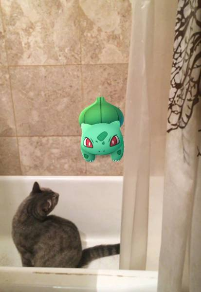 Apparently, Animals Can See Pokemons Too