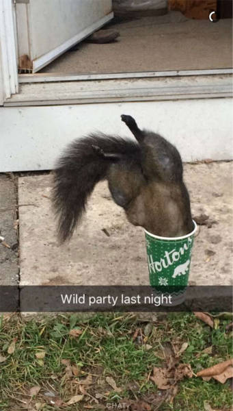 Collection Of  Some Of The Funniest Snapchats To Ever Hit The Web