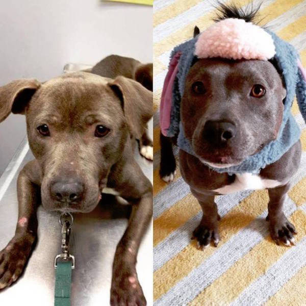 Facial Expressions Of Animals Before And After Adoption Will Hit You Right In The Feels