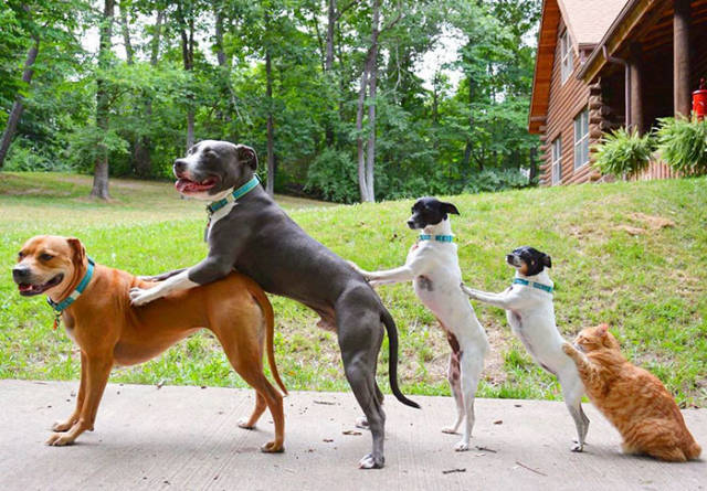 This Is What It's Like To Live With Four Dogs, A Cat And Two Ducklings