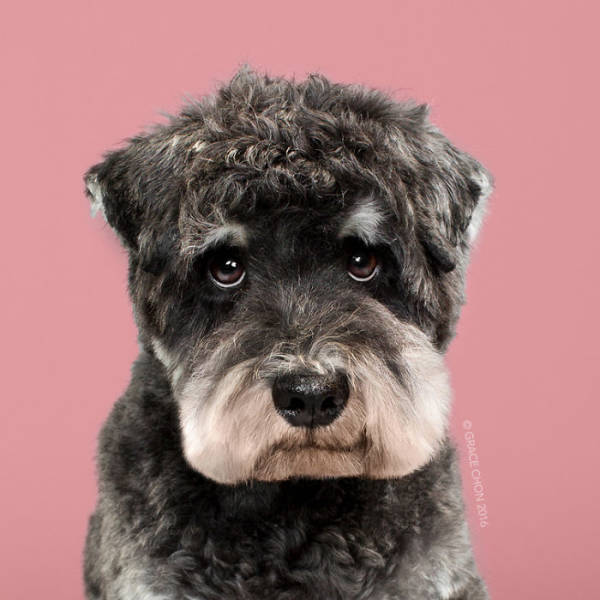 Dogs' Faces Before And After Grooming