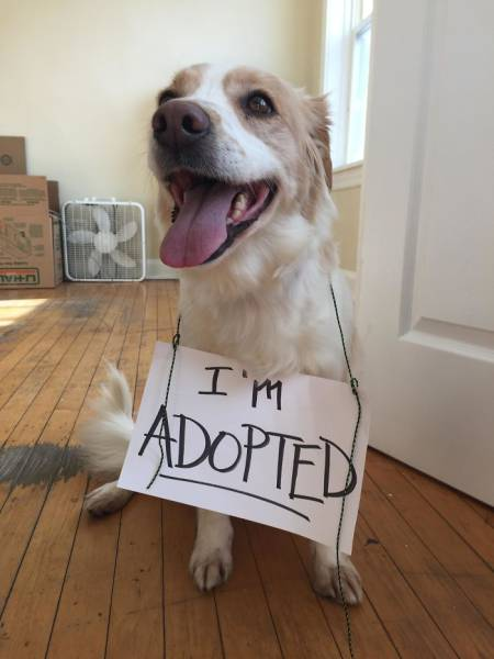 These Are The Faces Dogs Make When They Realize They've Just Been Adopted