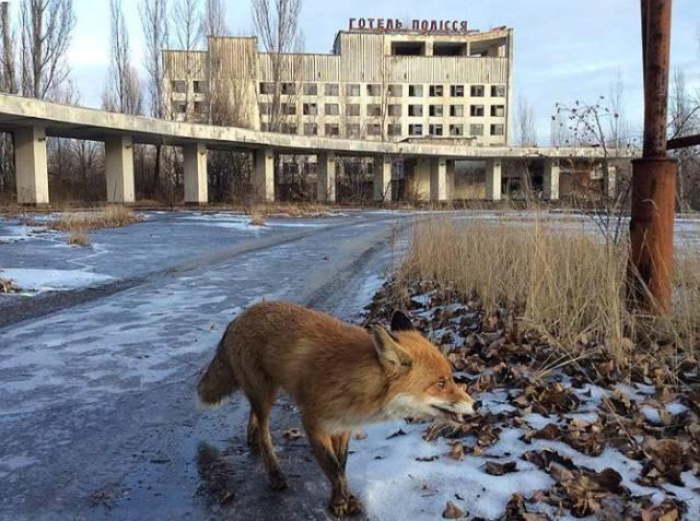 Animals Of Chernobyl