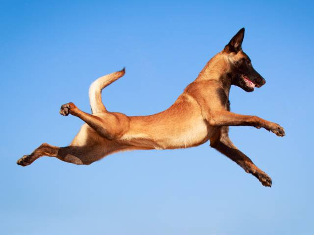 The List Of The Most Active And High-Energy Dog Breeds In The US