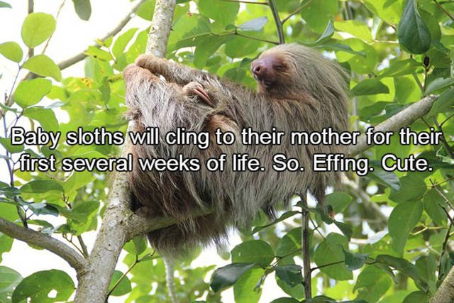 Fun Facts About Sloths