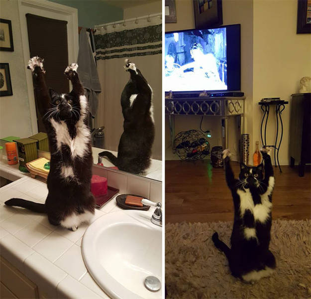 Why This Cat Keeps Putting Its Paws In The Air Is A Mystery To Everybody