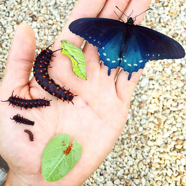 A Man Was Able To Repopulate Rare Butterfly Species In His Own Backyard