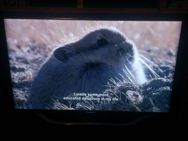 BBC Nature Show And Some Accidental Aziz Ansari's Subtitles is Simply Hilarious
